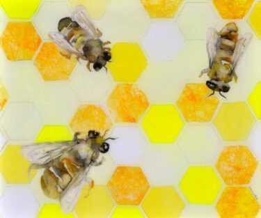 Honeycomb with three bees